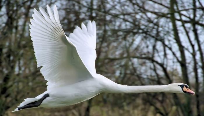 aves elegantes