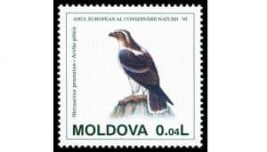 Dibujo del Águila o aguililla pennatus