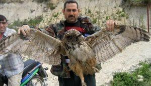 Hombre mostrando las alas de un Búho Real (Bubo bubo)