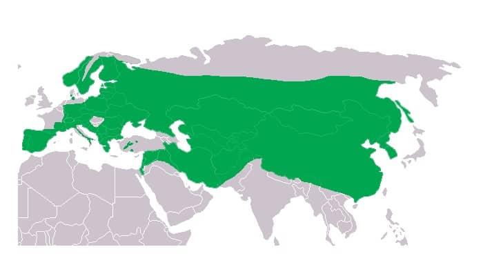 Distribución del Búho Real (Bubo bubo)