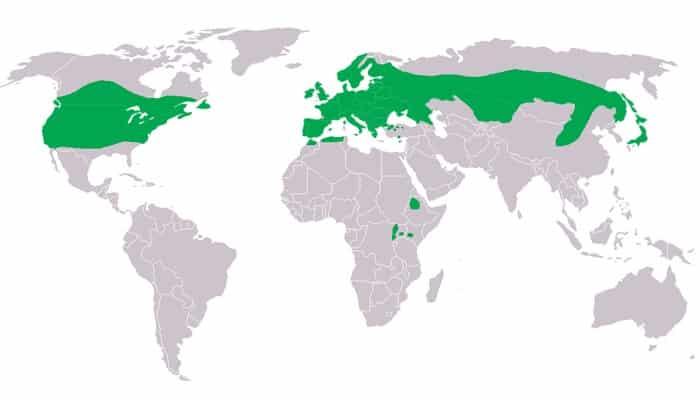 Distribución del Búho Chico (Asio otus)