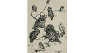 Ilustración de varios ejemplares de Búhos