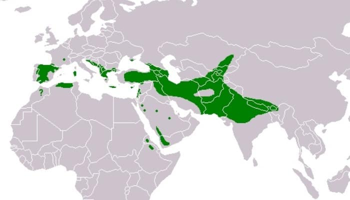 Distribución del Buitre Leonado (Gyps fulvus)