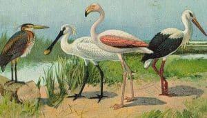 Hermosa pintura de aves entre ellas la Garza Imperial
