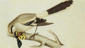 Un dibujo del Picapuercos comiendo una pariposa
