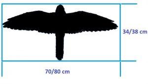 Tamaño del Cernícalo Vulgar (Falco tinnunculus)