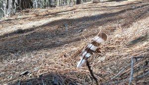 Una pluma del Gavilán Común en el suelo