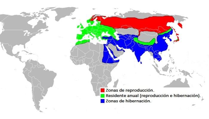 Distribución del Gavilán Común (Accipiter nisus)