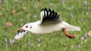 Gaviota Reidora (Chroicocephalus ridibundus) volando