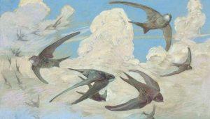 Hermosa pintura del Vencejo Común (Apus apus)