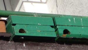 Cajas nidos de los Vencejos Comunes