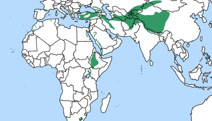 Distribución del Quebrantahuesos (Gypaetus barbatus)