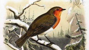 Petirrojo (Erithacus rubecula) en dibujo