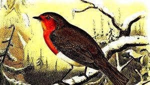 Hermosa ilustración del Petirrojo europeo (Erithacus rubecula)