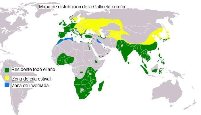 Mapa de distribución de la Gallineta común