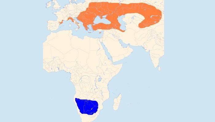 Distribución Geográfica del alcaudón chico (Lanius minor)