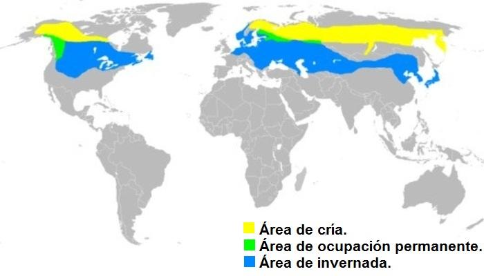 Distribución del ampelis europeo (Bombycilla garrulus)