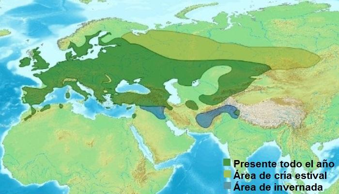 Distribución de la grajilla occidental (Coloeus monedula)