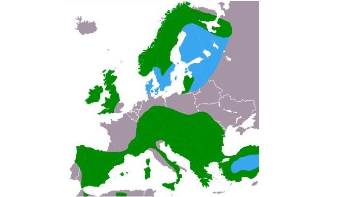 Distribución del mirlo acuático europeo (Cinclus cinclus)