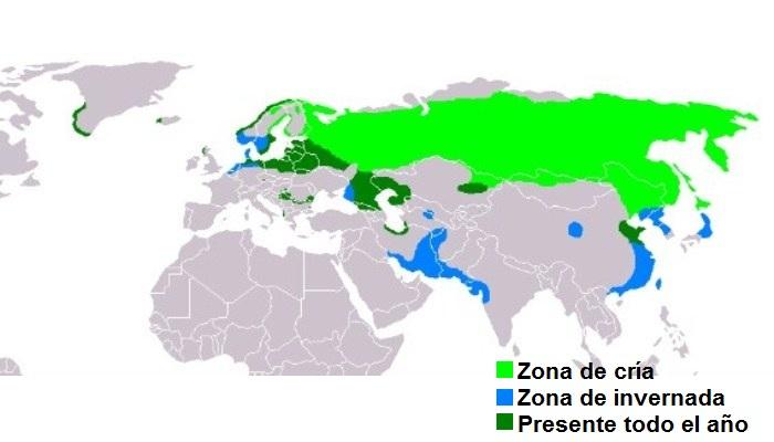 Distribución del pigargo europeo (Haliaeetus albicilla)