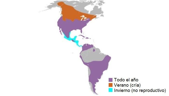 Distribución del cernícalo americano (Falco sparverius)