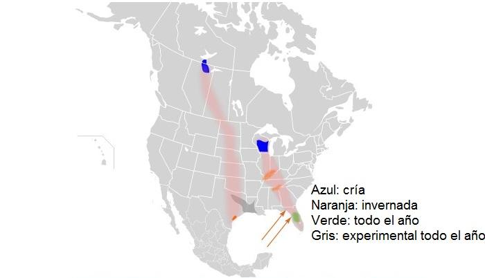 Distribución de la grulla trompetera (Grus americana)