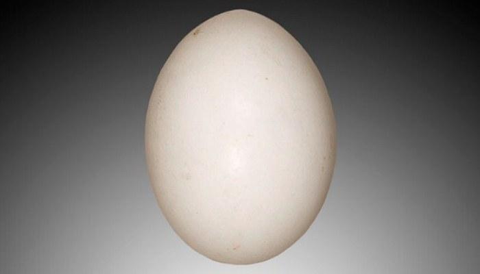 Huevo de Tórtola