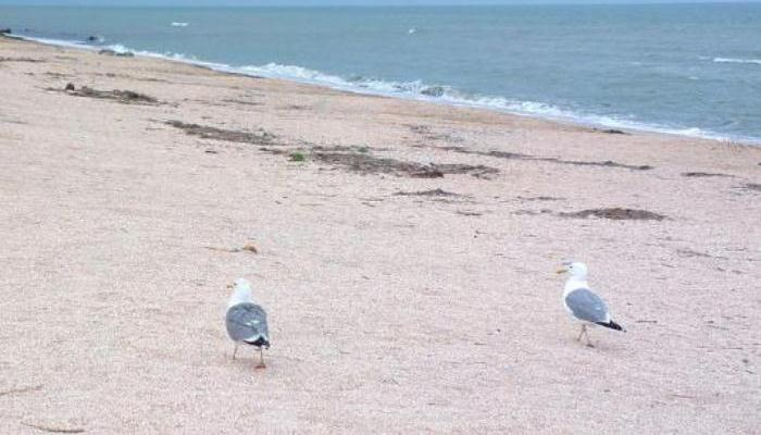 Dos gaviotas en la costa